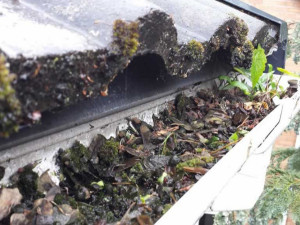 blocked gutter